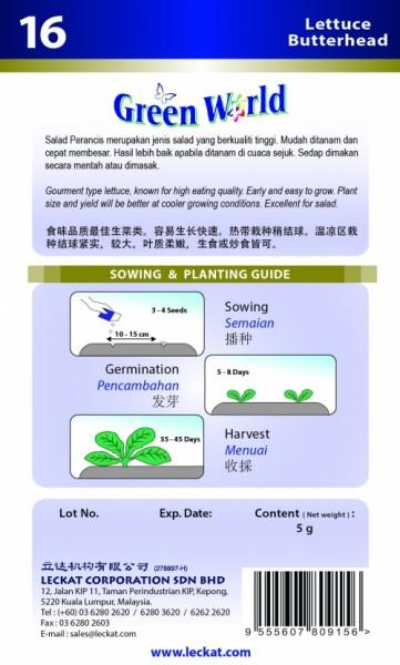 GW016 Lettuce Butterhead2
