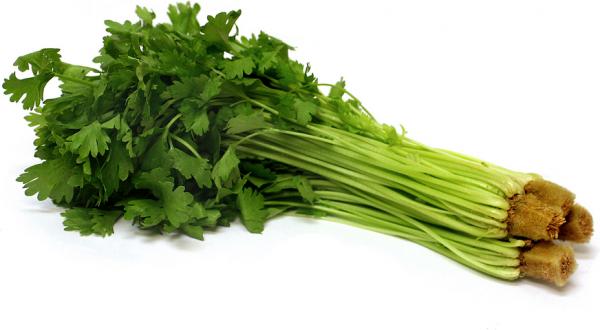 GW017 Celery3